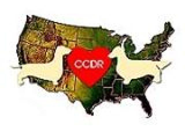 Coast to Coast Dachshund Rescue, Inc.