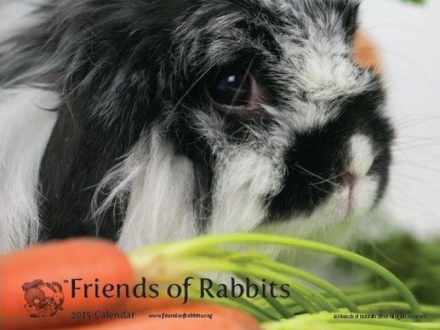Friends of Rabbits & House Rabbit Sanctuary