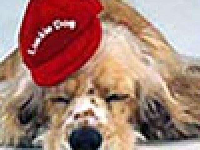 Luckie Dog Wellness