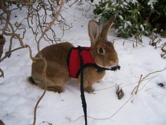 Solomons Island Rabbit Refuge
