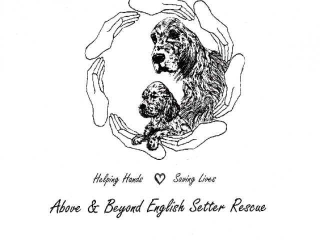 Above and Beyond English Setter Rescue