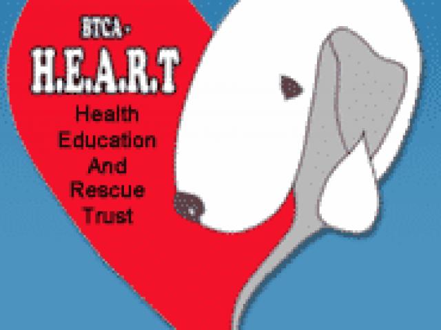 Bedlington Terrier Club of America – HEART Rescue
