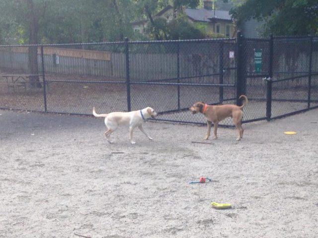 Benjamin Banneker Dog Park
