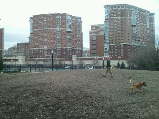 Dog Run Park at Carlyle