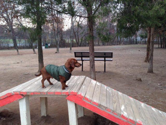 Chandon Dog Park