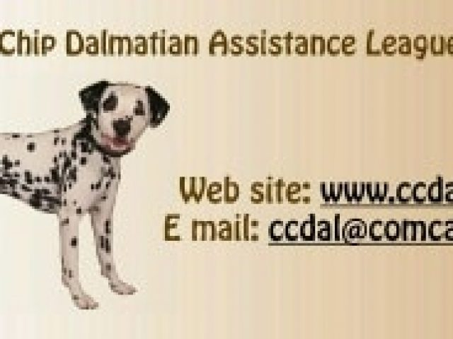 Chocolate Chip Dalmatian Assistance League (CCDAL)