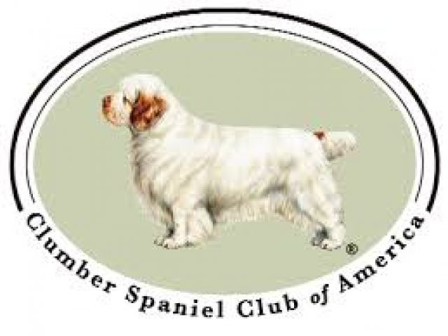 Clumber Spaniel Club of America – Rescue & Placement Committee
