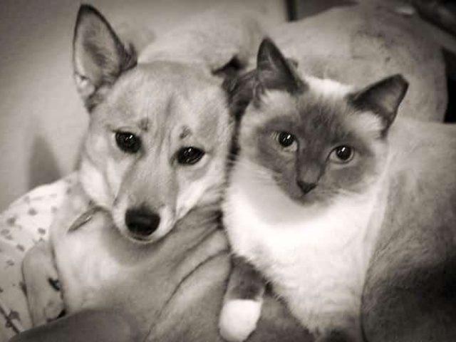 Companion Animal Behavior