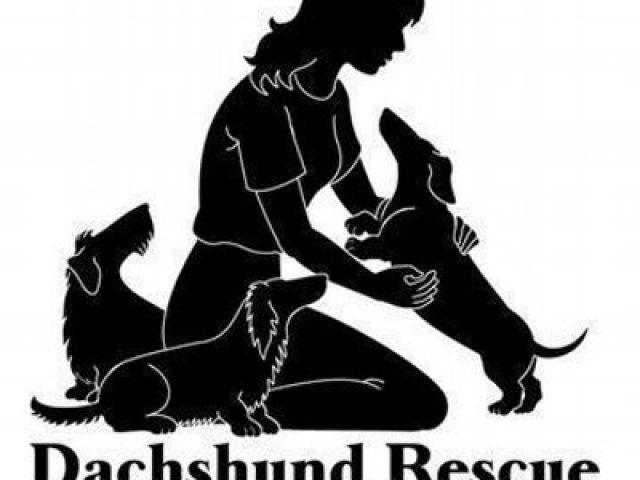 Dachshund Rescue of North America