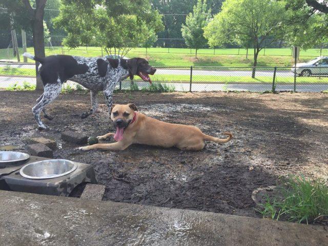 Fort Barnard Dog Park