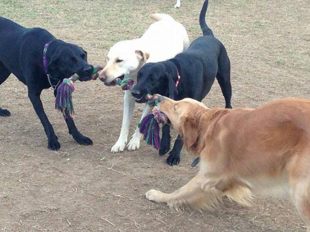 Grist Mill Dog Park