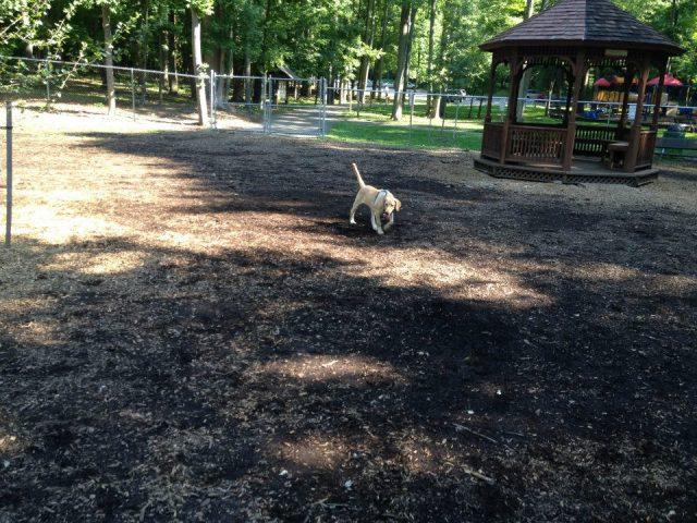 Iron Hill Dog Park