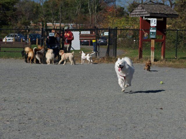 Mason District Dog Park