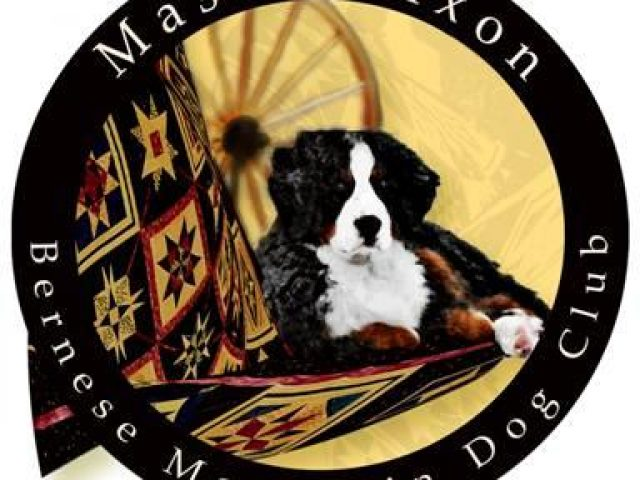 Mason Dixon Bernese Mountain Dog Club Rescue