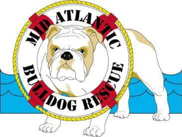 Midatlantic Bulldog Rescue
