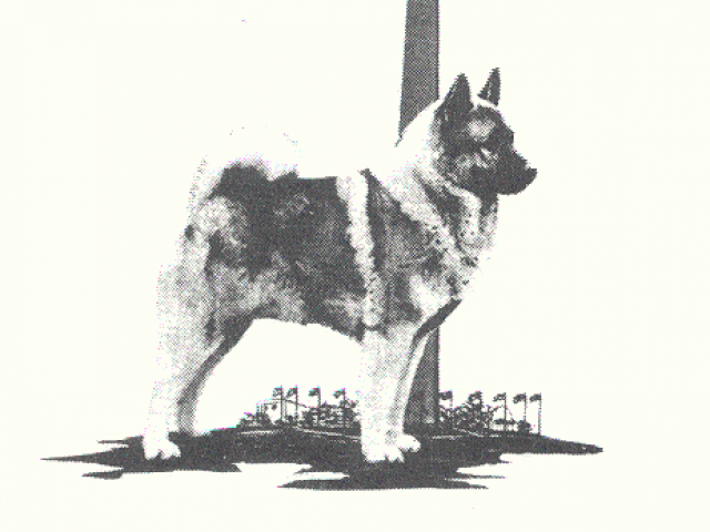 Norwegian Elkhound Club of the Potomac Valley Rescue