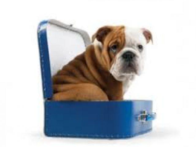 No Worries Pet Transport