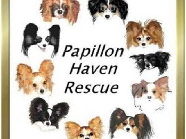 Papillon Haven Rescue
