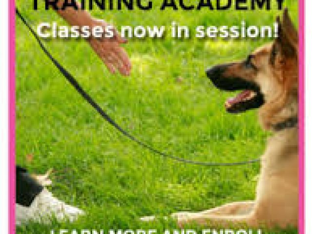 Paws Awhile Virtual Training Camp