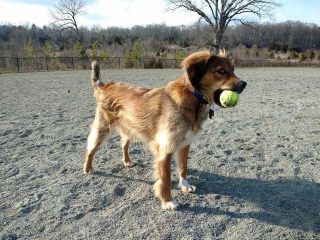 Rock Hill District Dog Park (Formerly Quinn Farm Dog Park)