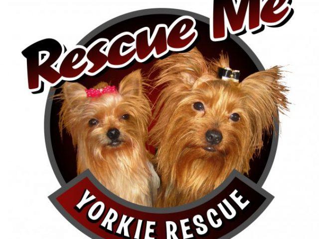 Rescue Me Yorkie Rescue