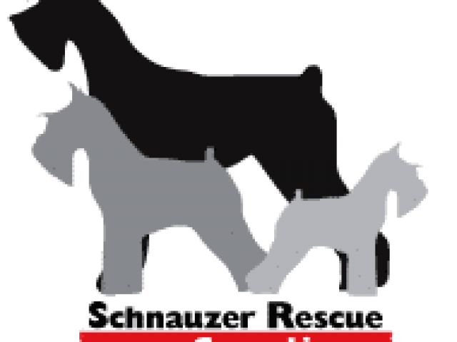 Schnauzer Rescue of the Carolinas