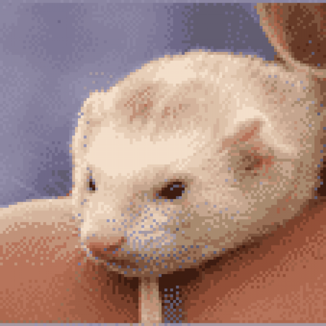 Maryland Ferret Protection and Welfare Society, Inc.