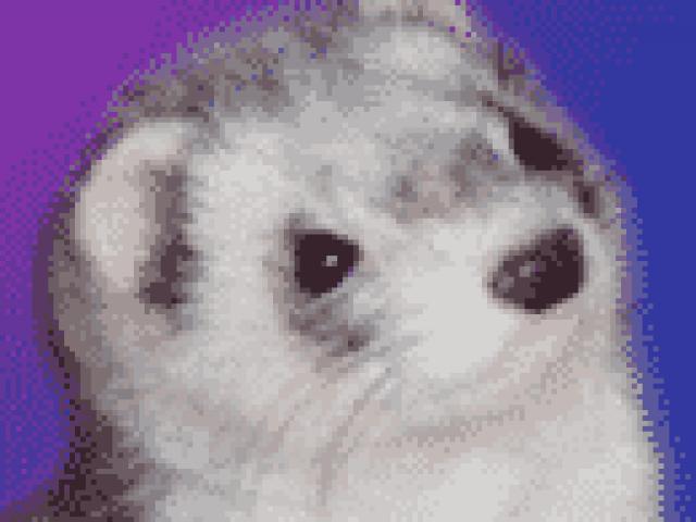 Oxford Ferret Rescue