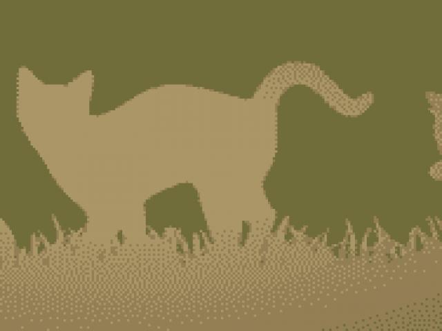 Ivy Woods Feline Sanctuary