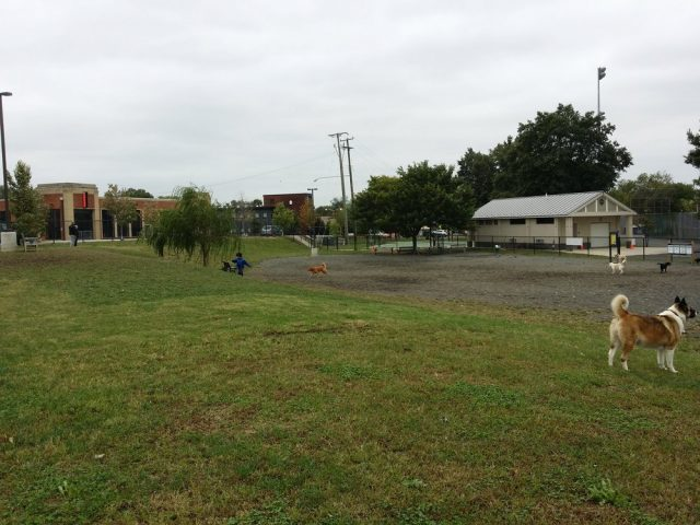 Simpson Stadium Dog Park