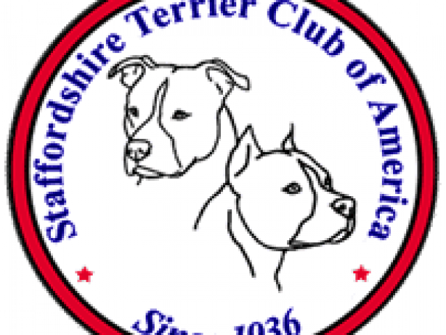 American Staffordshire Terrier Rescue