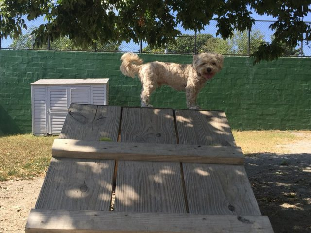 Towers Dog Park