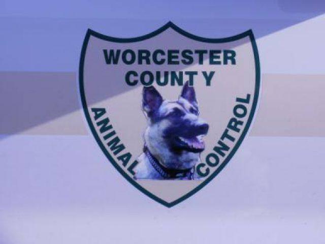 Worcester Animal Control