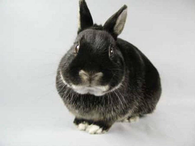 Sparkling Hearts Sanctuary Rabbit Rescue