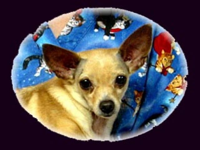 Cold Nose Warm Heart Chihuahua Rescue