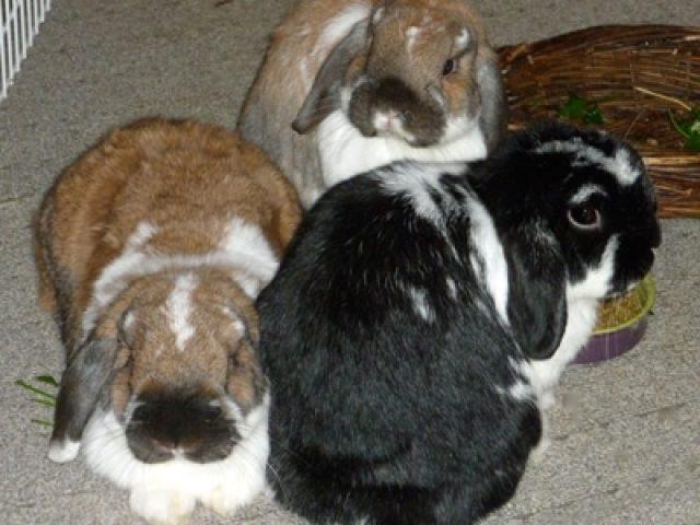 Bunny Lu Adoptions, Inc.