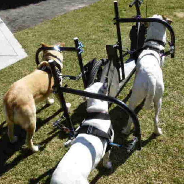 DogPoweredScooter.com