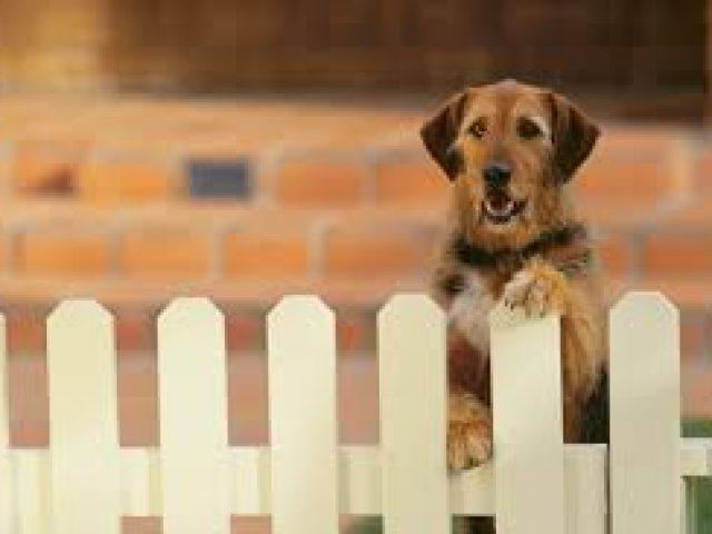 Dog Fence Maryland