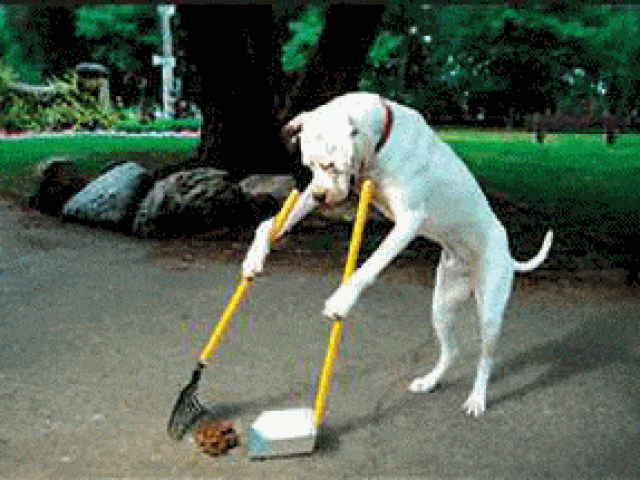 Scoop Dawg Pet Waste Removal