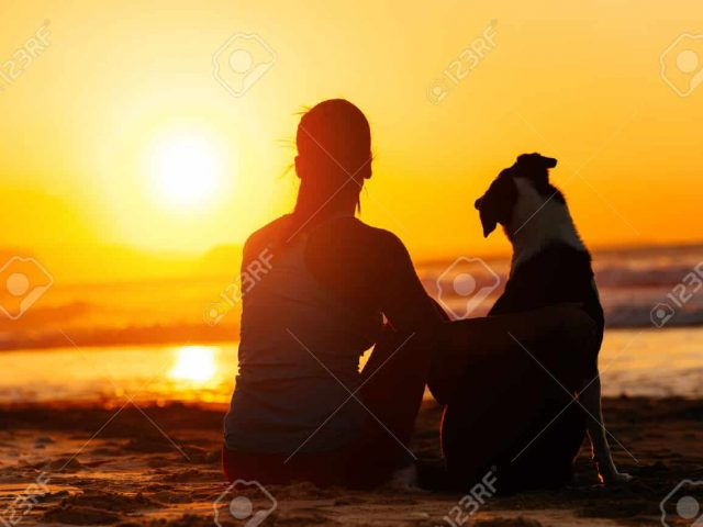 Relax and Enjoy Pet Services