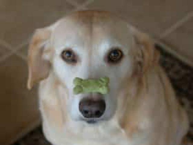 Pet Behavior Counseling