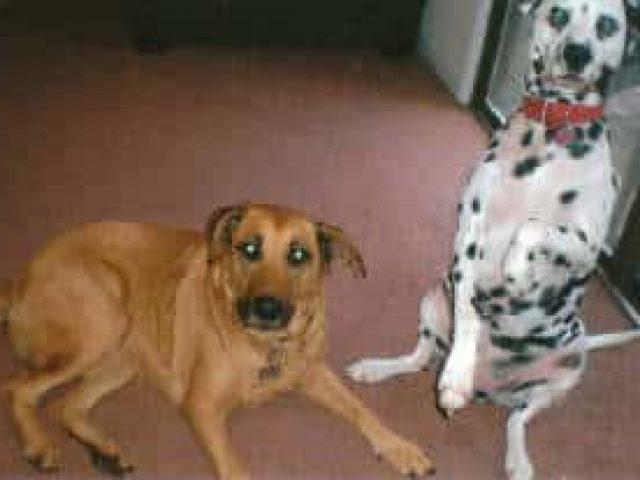 Dog Rescue of Maryland