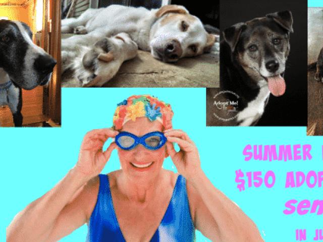 Dog XL Rescue