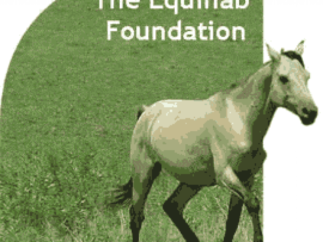 The Equihab Foundation, Ltd.