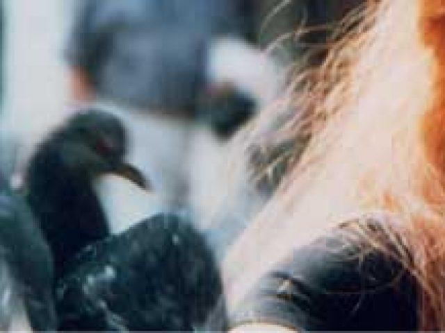 Hearts Content Animal Communication