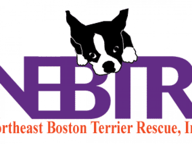 Northeast Boston Terrier Rescue