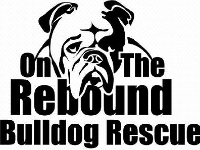 On the Rebound Bulldog Rescue Foundation