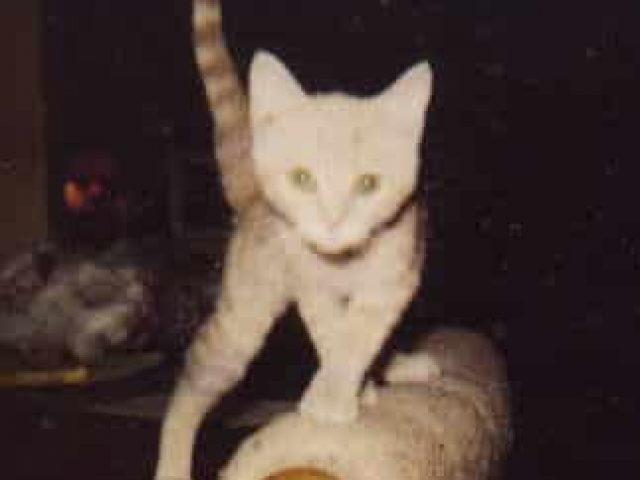Potomac Stray Cat Rescue, Inc.