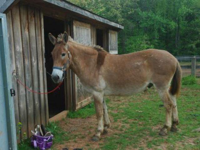 Royal Equine Rescue & Sanctuary, Inc.