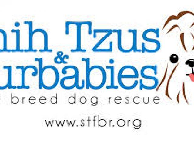 Shih Tzus & Furbabies